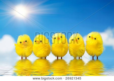 easter chicks in the water against sky background