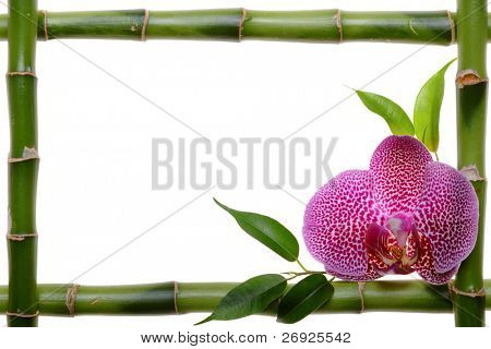 Bamboo frame and orchid on the white background