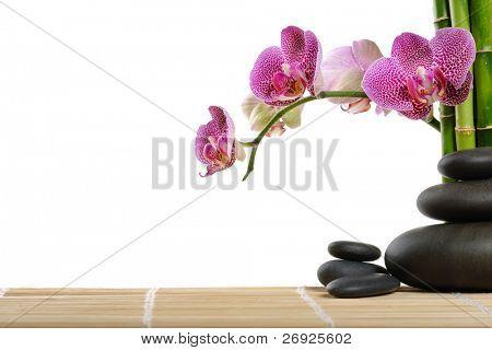 Orquídeas y piedras