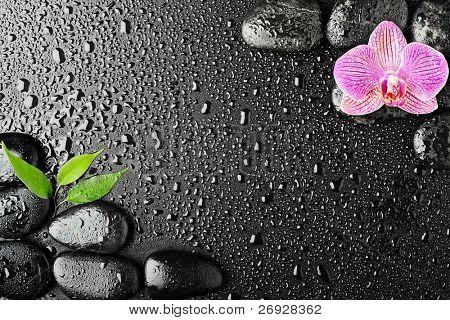 Rosa piedras de orquídea y basalto en el fondo negro