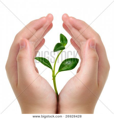 hands and plant isolated on white