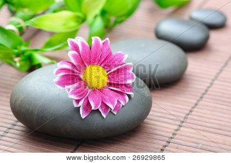 spa concept with zen stones and  daisy