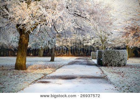 Frozen irish park in Limerick