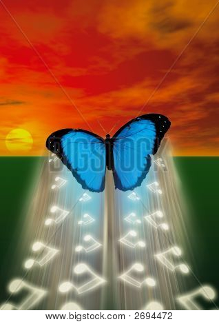 Butterfly Music