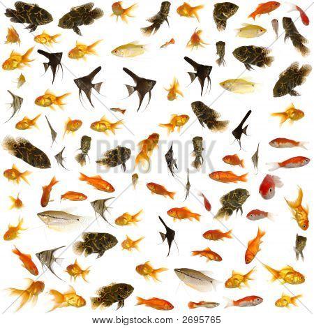 Coleção de peixes. 5000 X 5000 Pixels.