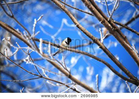 A Winter Rest