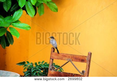 Bird Sitting On A Chair