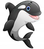 Vector Illustration Cartoon Of The Cute Killer Whale poster