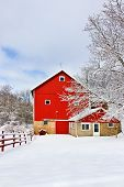 Rural Landscape With Red Barn, Wooden Red Fence And Trees Covered By Fresh Snow In Sunlight. Scenic  poster