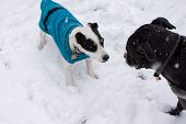 Cute Dogs Playing In The Snow Wearing Warm Winter Sweaters, Happy Pets Playing Outdoors In Winter Cu poster