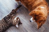 Cat And Dog Play Together. Cat And Dog In The Apartment. Close-up poster