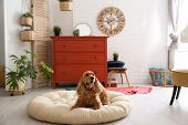 Adorable Dog On Pet Bed In Stylish Room Interior poster