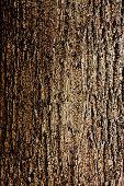 Постер, плакат: Кора дерева