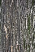 Постер, плакат: Текстуры коры дерева