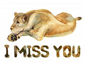 Watercolor Image Of Lioness On White Background With Text I Miss You poster