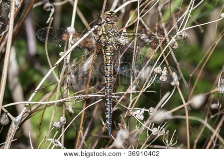 Female Migrant Hawker