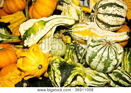 Exotic Fall Gourds