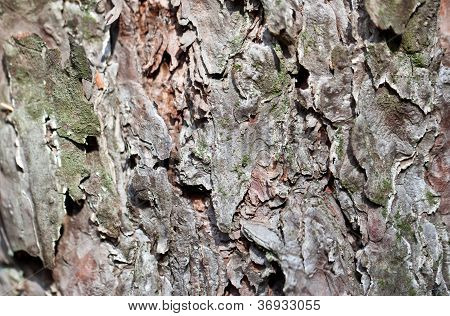 Grey Tree Bark Close View