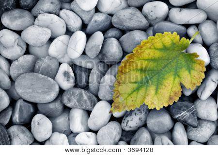 Leaf On Pebbles
