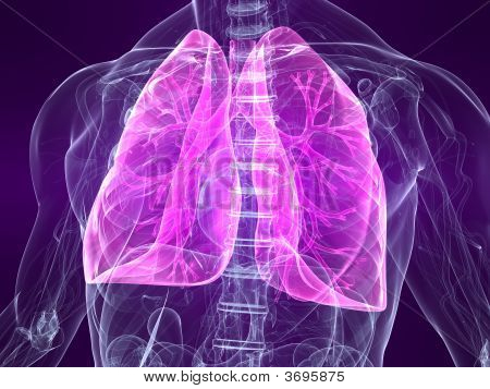 Highlighted Lung