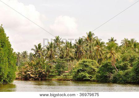 waikkal river