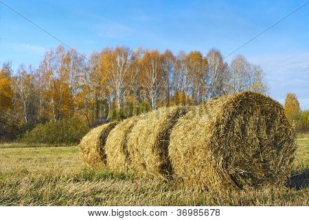 Bales Of Straw On The Retracted Field