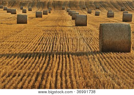 Harvested Field