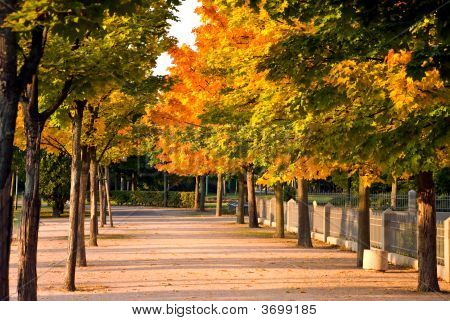 Colorful Autumnal Trees In The Park With Footpath
