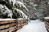 Snow-covered pine trees along foot bridge