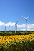 stock photo of fukushima  - Sunflower field with windmill in Fukushima Japan - JPG