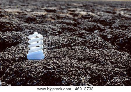 energy saving light bulb on dark desert