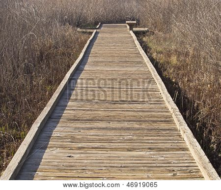 Path to Vanishing Point in Wetlands