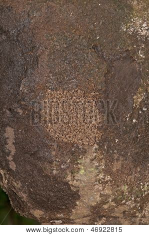Exposed Section Of A Termite Nest In A Rain Forest
