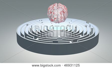 Human Brain Hovers over Circular Maze