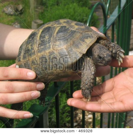 Care - A Tortoise Being Handed From One Hand To Another