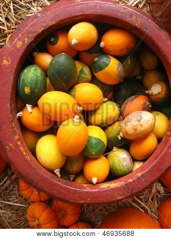small colorful gourds in a clay pot