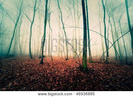 trees in the autumn mist