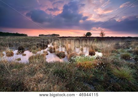 Warm Silent Sunset Over Swamps In Fochteloerveen