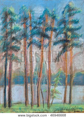 Pines On The Bank Of Lake