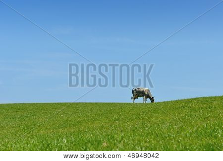 Cow Horizon