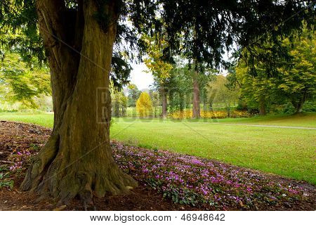Colourful pink flowers under a tree in an English garden