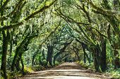image of marshlands  - Trees tunnel  - JPG