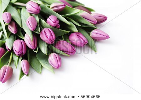 lovely tulips on white - flowers and plats