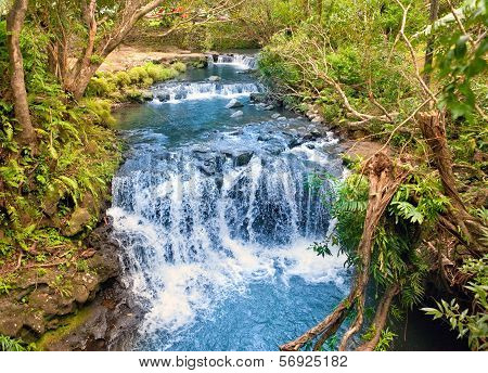The small river with thresholds in the tropical nature. Mauritius