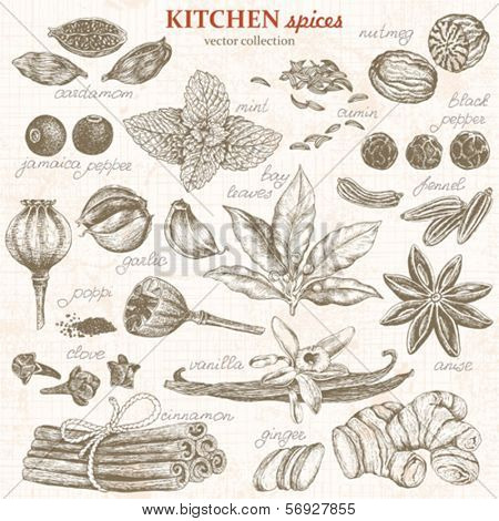 Collection of kitchen spices hand-drawn, vector illustration in vintage style.