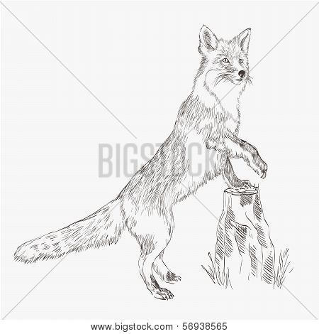 fox. vector sketch