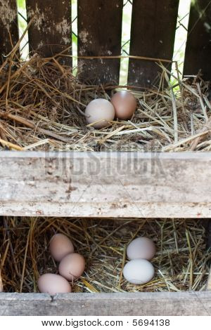 Eggs In Two Boxes With Haystack