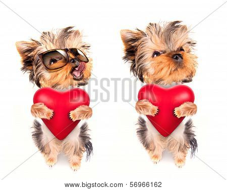 lover valentine  puppy dog with a red heart