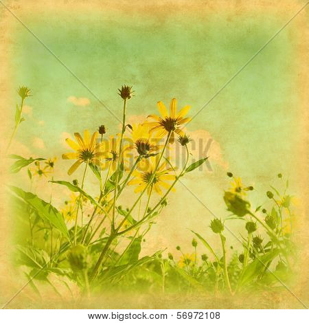 Vintage photo of yellow wildflowers in the field.