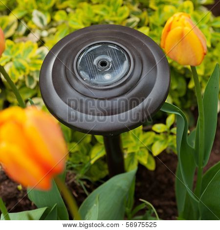 A garden solar light placed among the tulips in the springtime garden.